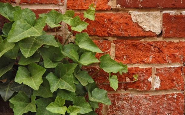 اليك افضل 10 نباتات لتنقية الهواء داخل المنزل، اكتشفوها